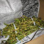 茹で立て枝豆と手巻き
