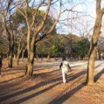 林試の森公園ジョグでぶー