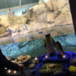 水族館とマイケルと若作り