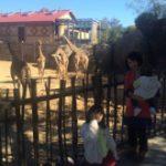 動物園リピーター