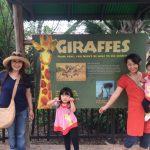 ヒューストン動物園に同い年のゴリラ