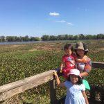 州立公園探検〜Brazos Bend State Park, TX